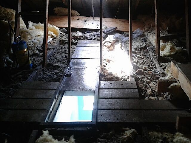 Guano removed from loft flooring ready for new insulation