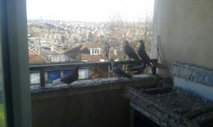Bird proofing solutions from C Hanlon Pest Control
