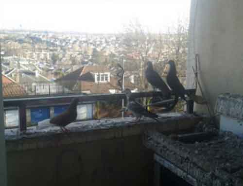 Pigeon Guano Removal, Pentland Road, Glasgow
