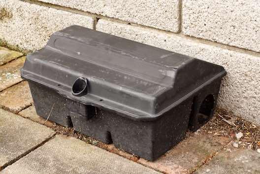 Rat trap pest control Glasgow