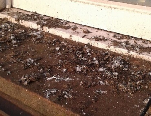 Guano Removal and Bird Spikes Installation, Troon